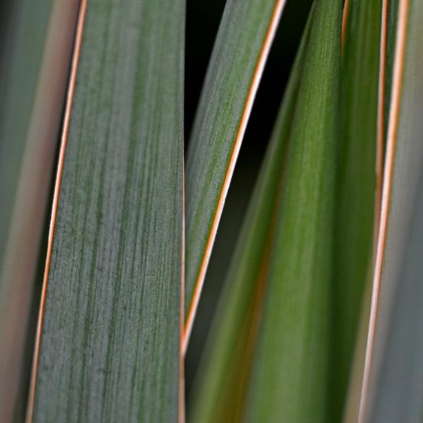 green gras by augenweide