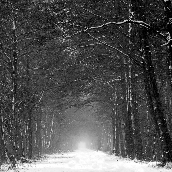 the road by augenweide