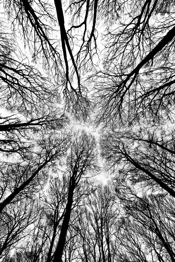 lothlorien by augenweide
