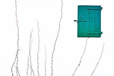 the green door by augenweide