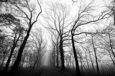 New Morning - Fog by augenweide