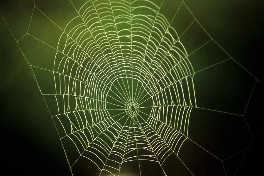 spiderart by augenweide