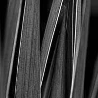grases by augenweide