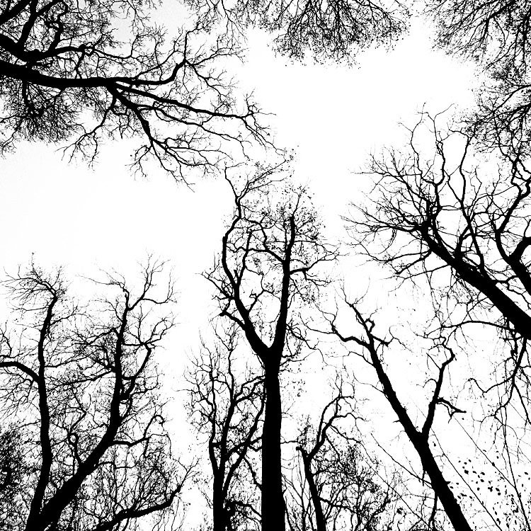 Shadow Tree by augenweide