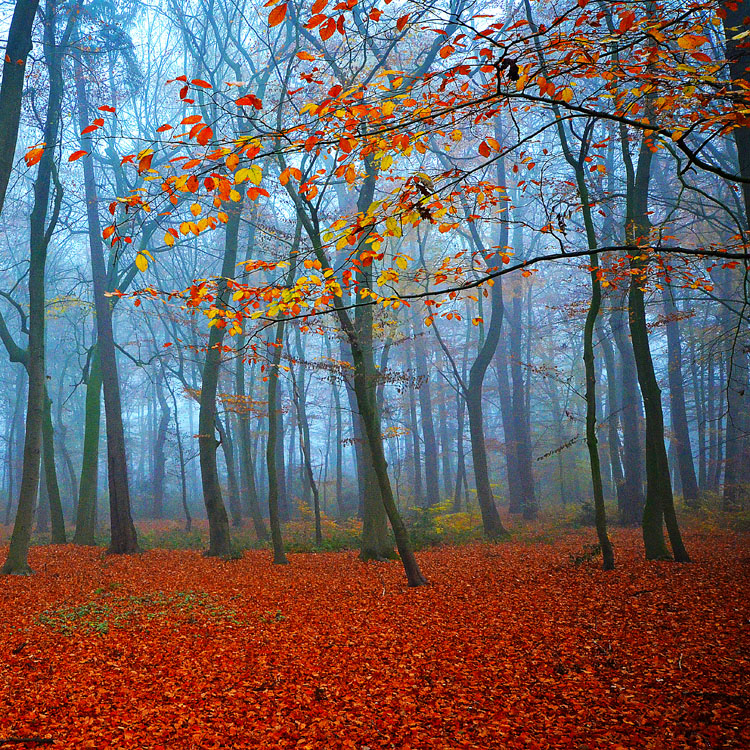 autumn breath by augenweide