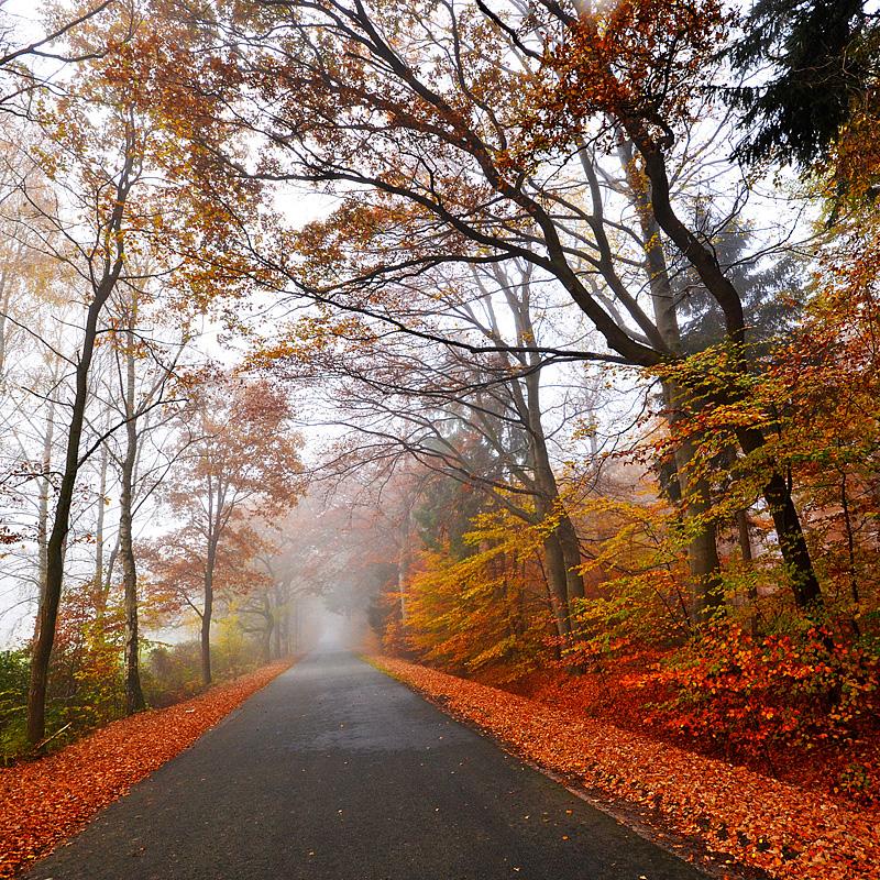 autumn feeling by augenweide