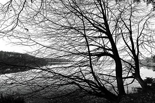 alone at the lake