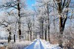 frozen day