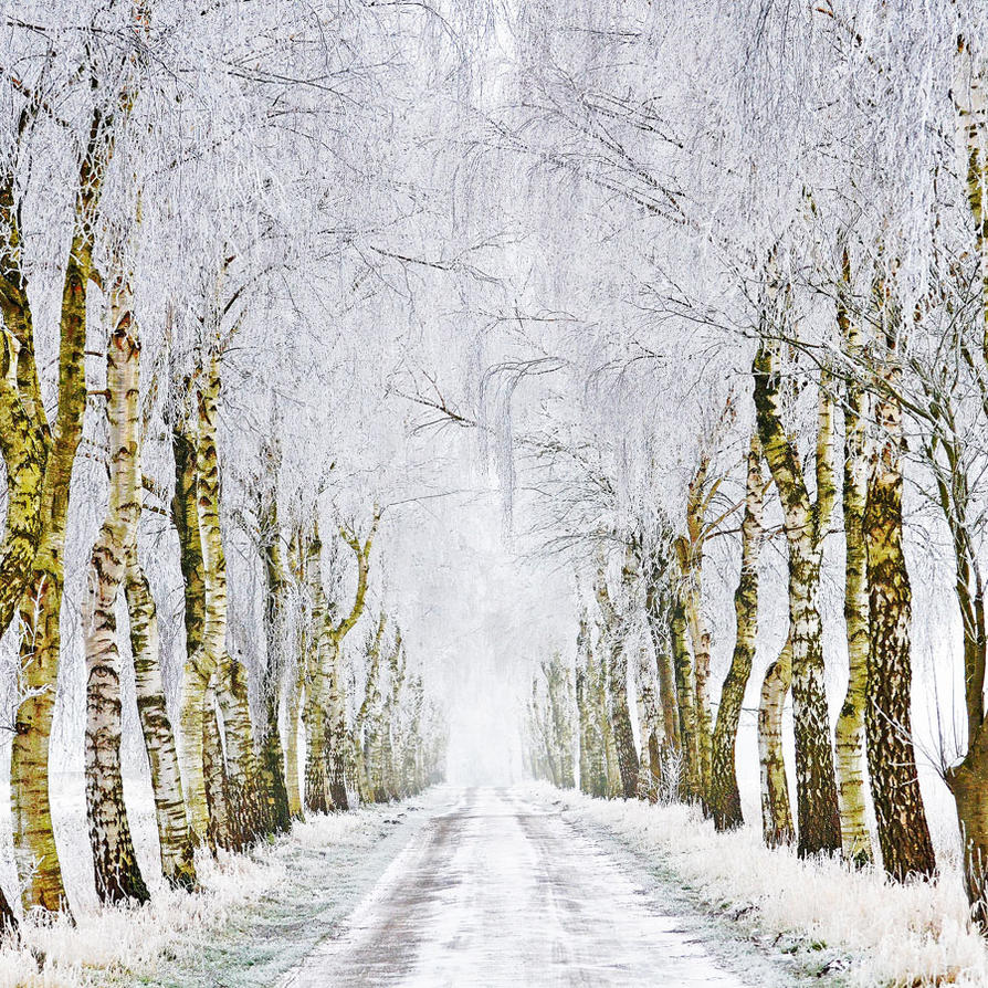 winterroad by augenweide
