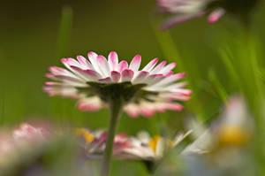 spring awakening by augenweide