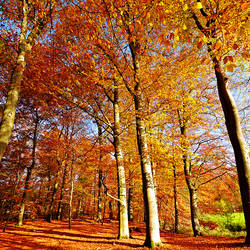 Autumn Leaves by augenweide