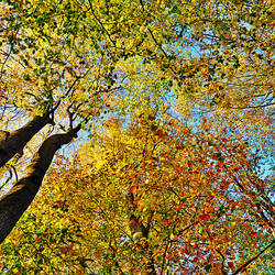 autumn roof by augenweide
