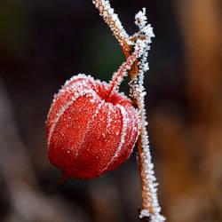 frozen beauty by augenweide