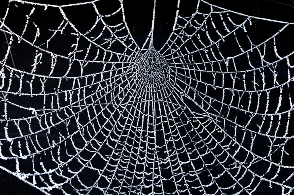 world wide web by augenweide