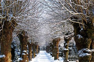 walking under snow