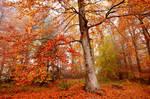 mystic autumn by augenweide