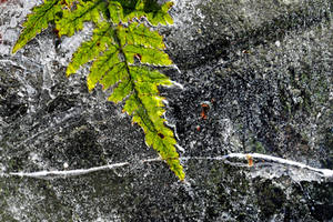 when autumn meets winter by augenweide