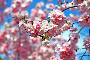 spring day by augenweide