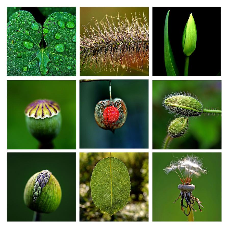 green by augenweide