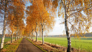 autumn morning by augenweide