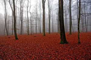 autumn carpet by augenweide