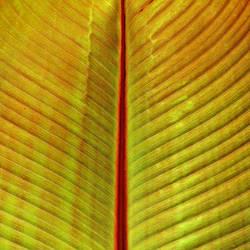 green wings by augenweide