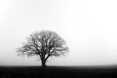 Tree by augenweide
