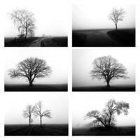 Winter's Voice by augenweide