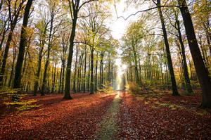 last autumn glory