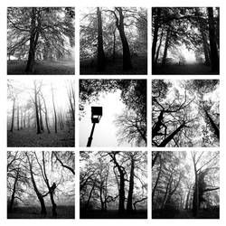empty forest