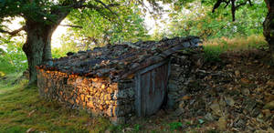 old sheepfold under the chestnut tree