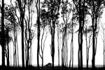 trees in a line