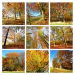 autumn everywhere