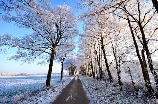 endless winter road