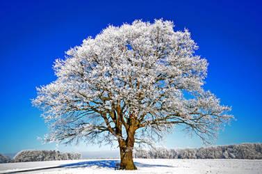good morning oak