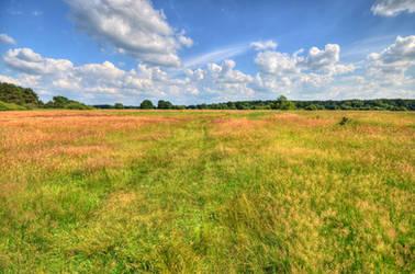 springday in the fields