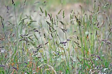 Grass straw