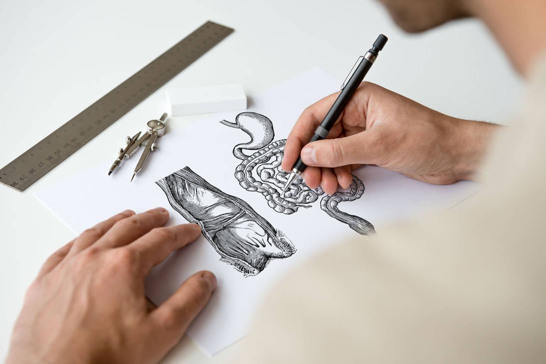 Anatomie - Systeme digestif by EugeneStanciu