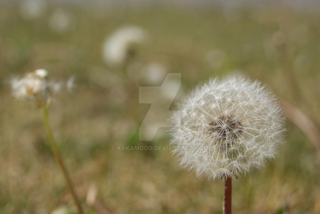 When the Wind Blows by KAKAMOOO