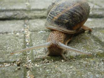 Snail by StrawberryGlaze