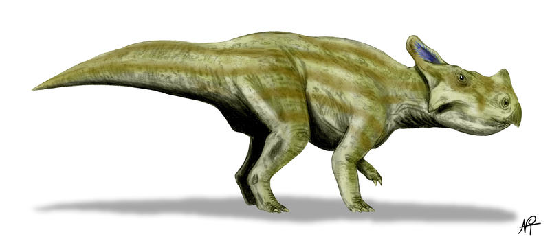 Montanoceratops by NTamura