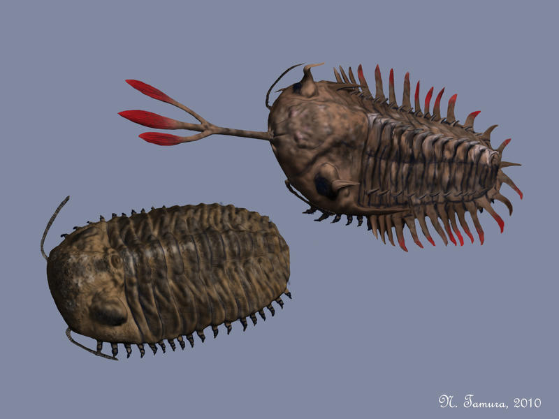 Trilobites by NTamura
