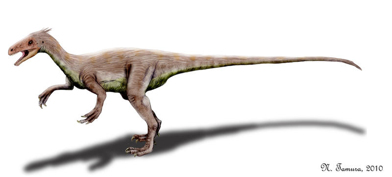 Ornitholestes by NTamura