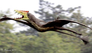 Sericipterus by NTamura
