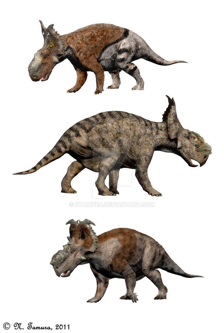 Pachyrhinosaurus III by NTamura