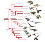 Dinosaur phylogeny