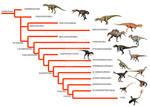 Theropod phylogeny