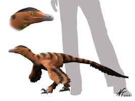 Sinornithosaurus by NTamura