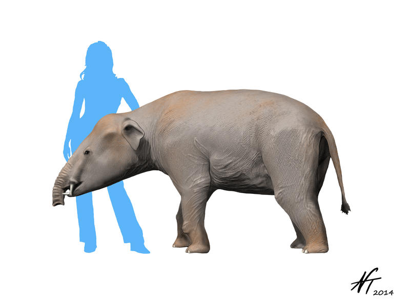 Palaeomastodon by NTamura on DeviantArt