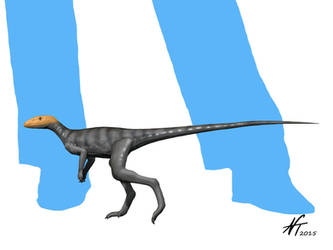 Marasuchus by NTamura